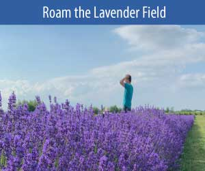 roam the lavender